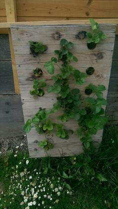 Erdbeerbeet Plants, Projects, Lawn And Garden, Plant, Planets