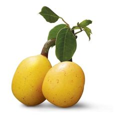 Marula oil has been known to be of the of most effective natural benefactors for healthy hair, clear skin, & glowing faces. Here are 10 marula oil benefits. Cold Pressed Oil, Pressed Glass, Cream Liqueur, Exotic Fruit, Rosehip Oil, Oil Benefits, Tutti Frutti, Fruit Trees, Fungi