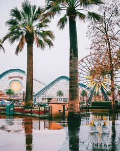 *insert obligatory caption about how much i love the rain* 🌧🌧🌧 (p. buh-bye, rip, ttfn, etc. to the ever lovely Paradise Pier — we barely… Disneyland Photos, Disneyland California, Disneyland Trip, Disney California Adventure, Disney Trips, Disney Day, Disney Love, Disney Magic, Collage Des Photos