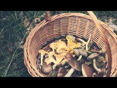 Mushrooms www.gzikipyry.pl