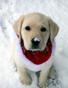 White Christmas Puppy