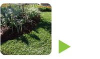 http://www.palmetto.com.au/laying-palmetto-buffalo-turf-in-late-spring-or-summer.html This time of year is great for laying Palmetto® Buffalo turf, but make sure you follow these watering instructions.  Click here to find a Palmetto® Buffalo turf grower in your area http://www.palmetto.com.au/laying-palmetto-buffalo-turf-in-late-spring-or-summer.html