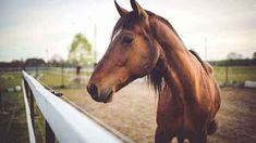 about-horse-in-hindi Equine Massage Therapy, Daily Jokes, Two Horses, Young Animal, Racehorse, Birds Eye View, Amazing Adventures, Horseback Riding, State Parks