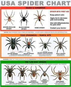 56 best spiders are bad images funny memes funny phrases hilarious rh pinterest com