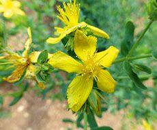 Gyógynövények a bőrápolásban Medicinal Herbs, Plants, Frame, Flora, A Frame, Plant, Frames, Hoop, Planting