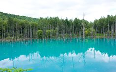Blue pond at Furano, Hokkaido. Baltic Sea Anomaly, Crooked Forest, Furano, Nature Water, Tourist Spots, Natural Phenomena, Greatest Adventure, Natural Wonders, Pond