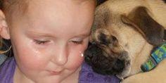Dog Born Without Eyes