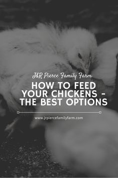 Raising a healthy flock starts with the right feed. Here are the best chicken feeds you can buy. Chicken Feed, Urban Homesteading, Baby Chicks, Small Farm, Raising Chickens, Organic Farming, Growing Vegetables, Livestock, Flocking