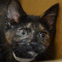 Fabiola will be available for adoption at PAWS Chicago's Annual 36-Hour Holiday Adopt-a-Thon on December 7th at 9am. #pawschicago #adoptable #pets