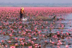 Myanmar. Inle lake.