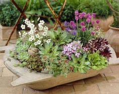 "Have a look at our inspirational plant-sets about ""A botanical breakfast in bed, well. ✓ garden ideas ✓ urban gardening ✓ borders ✓ cottage gardens ✓ pots & containers ✓ and much Succulents In Containers, Container Flowers, Cacti And Succulents, Foliage Plants, Unique Gardens, Breakfast In Bed, Garden Pots, Garden Ideas, Container Gardening"