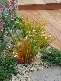Go Gardening - Helping New Zealand Grow - Garden Inspiration, tips and advice from the expert Coastal Gardens, Small Gardens, Outdoor Gardens, Garden Ideas Nz, Garden Inspiration, Garden Landscape Design, Landscape Designs, Tropical Garden, Dry Creek
