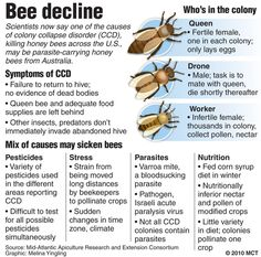how does ccd affect bees - Google Search