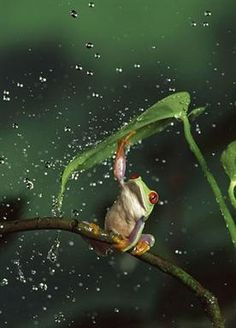 Froggy in the Rain