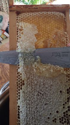 Slicing the capping wax off the raw honey Honey Bee Hives, Honey Bees, Harvesting Honey, Bee Facts, Bee Hive Plans, Beekeeping For Beginners, I Love Bees, Backyard Beekeeping, Bees And Wasps