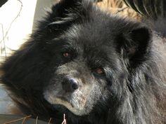 My sweet dog Shadow.