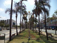 Canteiro central da Avenida Goiás. Centro, Goiânia.