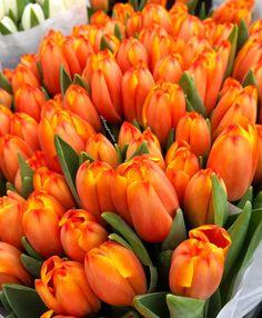 "2,057 Likes, 37 Comments - Frangipanibine (@frangipanibine) on Instagram: ""I love itHave a nice Thursday my dear friends#ptk_flowers #tulips #springtime…"""