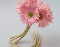 1 Garbera Daisy Gerber Daisy Natural Real Touch by EdenOfFlower