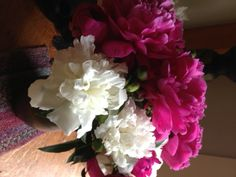 peonies embody the impermanence of life Contentment, Peonies, Journey, Plants, Life, The Journey, Plant, Planets