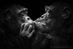 Wolf-Ademeit-animals-16