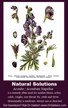 Aconite is an excellent remedy for sudden illness, aches, colds, coughs, sore throat, flu, chills and fever. Keep Aconite on hand for quick recovery after becoming ill following exposure to weather changes, such as very cold or very hot weather, exposure to dry winds or inclement weather. Aconite helps with symptoms from sudden shock, fear, fright. Homeopathy is medicine. Always use as directed. Got Questions? Ask Dr. Garber! http://www.drgarbers.com/