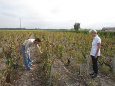 Checking the source for our Cabernet Sauvignon grapes in Paulliac