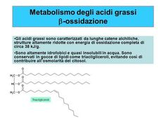 Metabolismo degli acidi grassi b-ossidazione