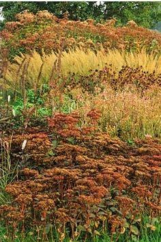 Calamagrostis brachytricha, Eupatorium atropurpureum, seed heads of Sedum, Astrantia, Echinacea - Pensthorpe Millenium Garden, Norfolk, Autumn
