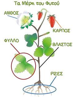 Νηπιαγωγός για πάντα Environmental Education, Create Your Own Website, Spring Crafts, Trees To Plant, Kids And Parenting, Paper Cutting, Preschool, Nursery, Science