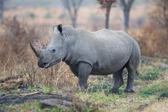 Hopes that justice will finally be served for the alleged rhino poaching kingpin, Dumisani Gwala, who is expected to appear in court soon.