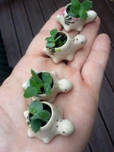 rosey jones Succulents Garden, Succulents Tumblr, Succulent Planter Diy, Planting Flowers, Tiny Turtle, Ceramic Turtle, Polymer Clay Turtle, Polymer Clay Animals, Clay Planter