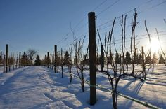 The first snow in Loudoun made 8 Chains North Winery even more beautiful!