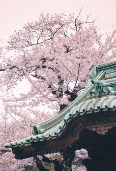 Must-See: Cherry Blossom season in Japan