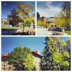 A few signs of fall on campus today. Share your campus photos using #minesfall.