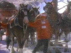 This classic Clydesdale Christmas commercial proves that Budweiser has been pulling on our heartstrings for decades – Rare Christmas Adverts, Christmas Music, Merry Christmas, Christmas Wishes, Budweiser Commercial, Animals And Pets, Cute Animals, Horse Cards, Clydesdale Horses