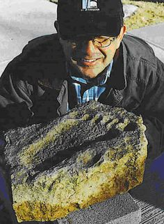 Creation Evidence On Pinterest Fossil Museum Displays