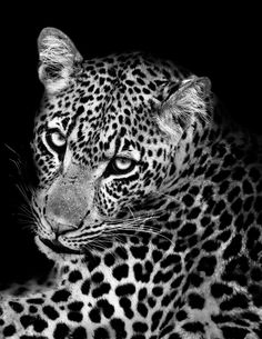 Moodboard – Célébrer la beauté envoûtante du noir et blanc