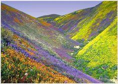 Valley Of Flowers Bhyundar Valley, Uttarakhand - India Tip: Flowers Blooms between June-Oct