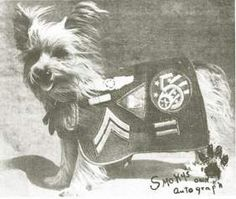 Smoky, the World War II Yorkie war hero - New York Dogs | Examiner.com