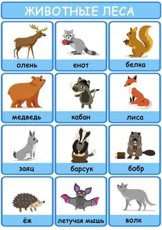 Learning Languages Tips, Album, Dogs, Animals, Animales, Animaux, Pet Dogs, Doggies, Animal