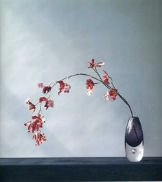 Perfect flower photography, almost like a painting. Robert Mapplethorpe was the best in flowers