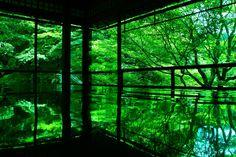 Kyoto, Japan 瑠璃光院 #緑 #Green