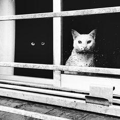 Siyah  & Beyaz