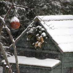 Winter Storm Preparations for Backyard Chicken Keepers - Tillys Nest Blog - GRIT Magazine