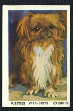 1962 Pekingese trade card issued by NABISCO FOODS Ltd in packets of their AUSTRALIAN breakfast cereals