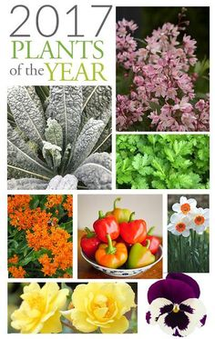 2017 plants of the year that you should be growing in your garden