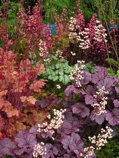 "Shade garden in back. Heuchera is available in so many colors now, I recommend ""Wendy"" and ""Palace Purple"", both old standards. Dream Garden, Garden Art, Garden Design, Herb Garden, Shade Garden Plants, Decoration Plante, Shade Perennials, Woodland Garden, Heuchera"