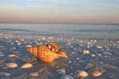 World Renowned Shelling on Sanibel Island, FL