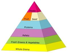 The parrot food pyramid
